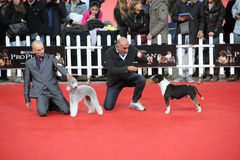 Международная выставка собаки стоковое фото rf