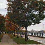 Междурядье дерева Стоковые Фотографии RF