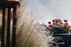 мексиканец травы Стоковые Изображения