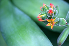 мексиканец фейерверка Стоковые Фото