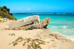 Мексиканская игуана в полуострове Юкатан, Мексика Стоковые Изображения RF