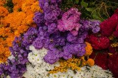 Мексиканские цветки стоковые фотографии rf