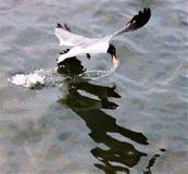 Мексиканский залив с чайкой стоковые фото