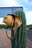 Мексиканский кактус Стоковая Фотография RF