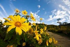 Мексиканский цветок с голубым небом Стоковые Фото
