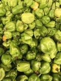 Мексиканский habanero перца стоковые изображения