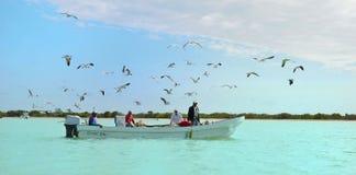 Мексика, Celestun - 20-ое марта 2014: Fishermans в Celestun стоковое изображение rf