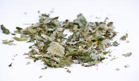 Мелисса травы Стоковое фото RF
