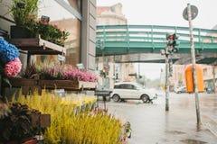 Мелкий бизнес для продавать цветет в немецком городе Различные цветки в деревянных коробках для продажи На заднем плане Стоковая Фотография RF