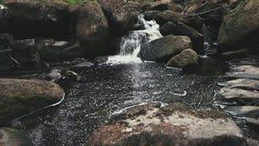 Мелкий водопад спрятанный прочь в середине леса в Великобритании, Европе - весне 2019 сток-видео