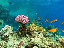 мелководье рифа рыб стоковая фотография