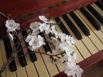 Мелодия весны Стоковое Фото