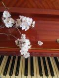 Мелодия весны Стоковая Фотография RF