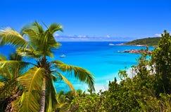мелодия тропическая Стоковые Фото