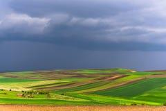 Мельницы adnd поля тюльпана старые в netherland Стоковые Изображения RF