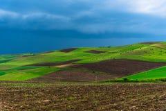 Мельницы adnd поля тюльпана старые в netherland Стоковое Изображение