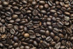 Мелют кофейные зерна Стоковое Фото