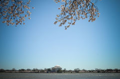 мемориал jefferson вишни цветений Стоковое Изображение