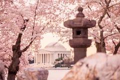 Мемориал Jefferson во время фестиваля вишневого цвета Washingt Стоковые Фотографии RF