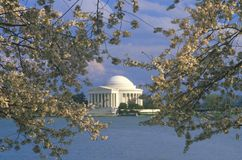 Мемориал Jefferson с цветениями вишни весны, Вашингтон, d C Стоковое Изображение RF