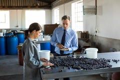 Менеджер инструктируя работника пока проверять сжатые оливки Стоковые Фото