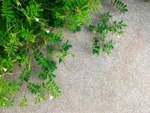 Меньшая ветвь зеленого растения и цветка на пакостной конкретной земле в большом городе для естественной предпосылки Стоковое фото RF