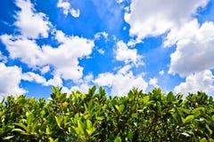 Меньшая загородка дерева с голубым небом с облаком Стоковое Изображение