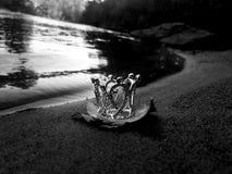 Меньшая крона стоковое фото