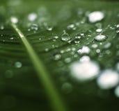 Меньшая роса на зеленых лист Стоковые Фото