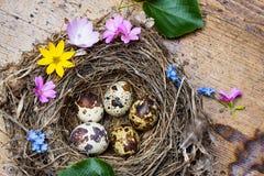 Меньшее гнездй с пасхальными яйцами весны - натюрморт Стоковая Фотография RF