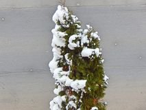 Меньшее зеленое дерево с снегом Стоковые Изображения
