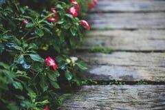 Меньшее красное цветене цветка на обочине Стоковое Фото