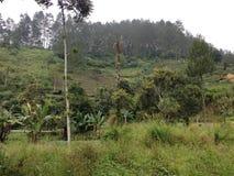 Меньшие джунгли 4 Стоковые Изображения RF