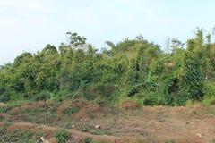 Меньшие джунгли 6 Стоковое фото RF