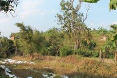Меньшие джунгли Стоковые Изображения RF
