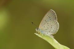 Меньшие засевают синь травой Стоковые Фотографии RF