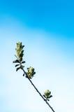 Меньшие листья против голубого неба Стоковые Изображения RF