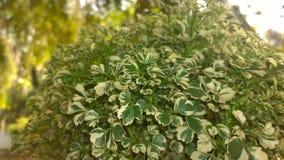 Меньшие листья Стоковое фото RF