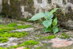 Меньшие папоротники зеленого цвета дерева и мха на кирпичной стене Стоковые Изображения