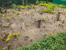 Меньшие пни дерева в саде Стоковые Фотографии RF