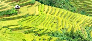Меньшие поля дома террасные wanderous Стоковое Фото