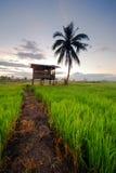 Меньшие хата и кокосовая пальма Стоковое фото RF