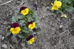 Меньшие цветки весны Стоковое фото RF