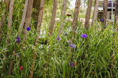 Меньшие цветки лета фиолета Стоковые Изображения