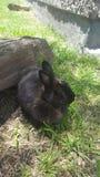 Меньший зайчик Стоковое Изображение RF