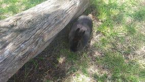 Меньший зайчик Стоковое Изображение
