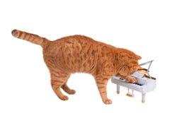 меньший игрок рояля Стоковое Изображение RF