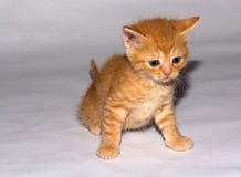 Меньший котенок имбиря Стоковые Изображения