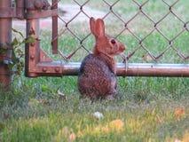 Меньший кролик зайчика в саде Стоковое фото RF