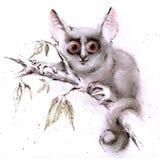 Меньший куст-младенец Стоковая Фотография